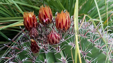 close up of cactus flower in