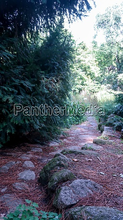 rocky path between trees in royal