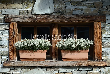 windows with edelweiss