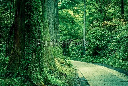 of forest was dense image takao