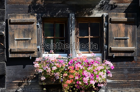 old windows with flowers
