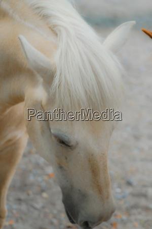 hakuba image of silky hair