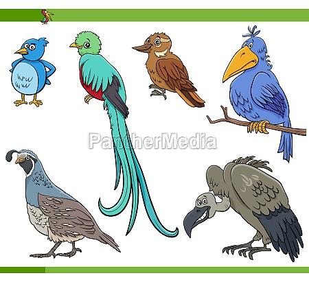cartoon birds species animal characters set