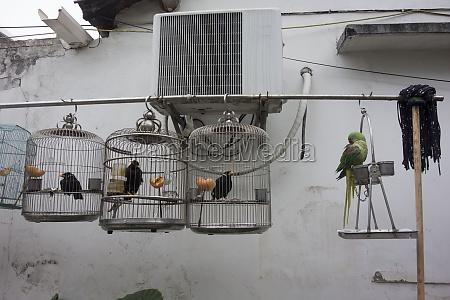 bird cage or bird house
