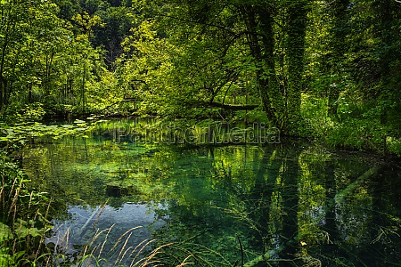 tree trunks submerged in emerald green