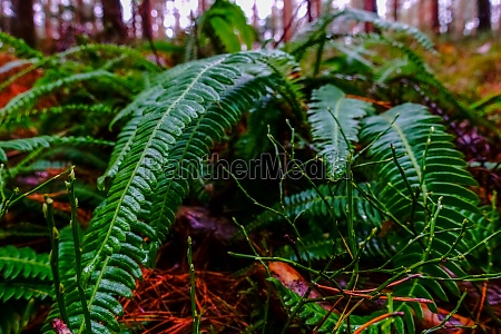 fresh fern on the forest floor