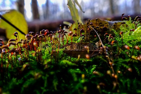 little brown plants in a green