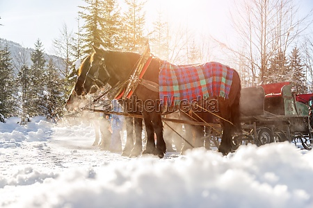 horse drawn carriage in winter steam