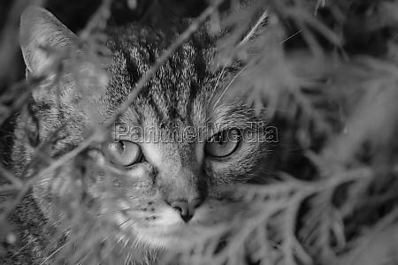 a cat roams through its territory