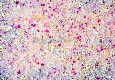 multicolored animal filler white and purple