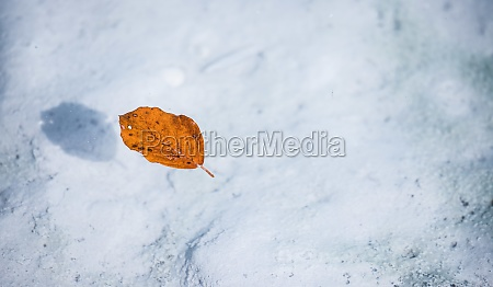 orange leaf swims in the blue