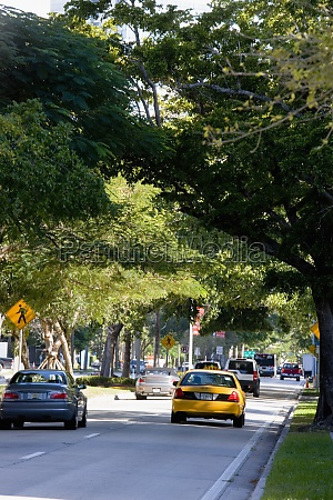 taxi driving down tree lined street