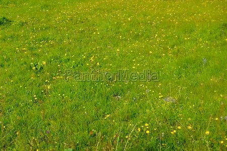 fresh green meadow with grass and
