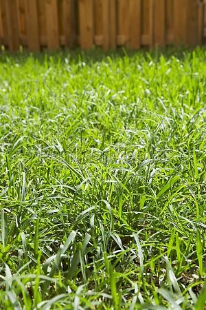 grass in a backyard