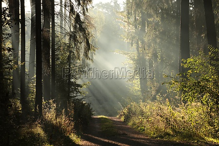 autimn forest at dawn