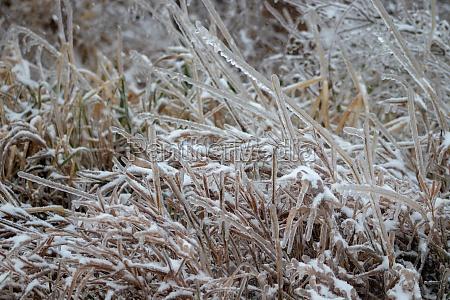 ice covered grass in november nebraska