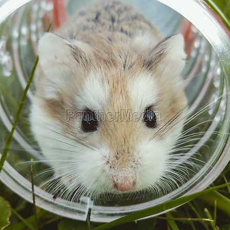 homemade hamster in a cage in