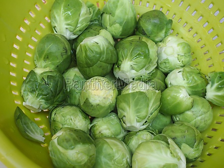 brussels sprout cabbage vegetables food