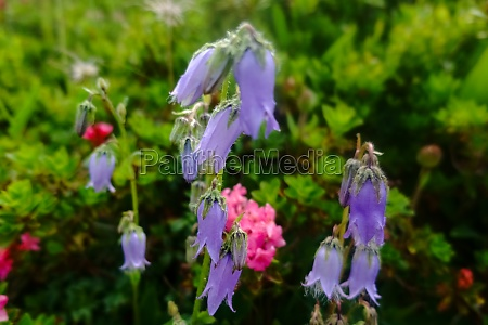 purple flowers while hiking in the