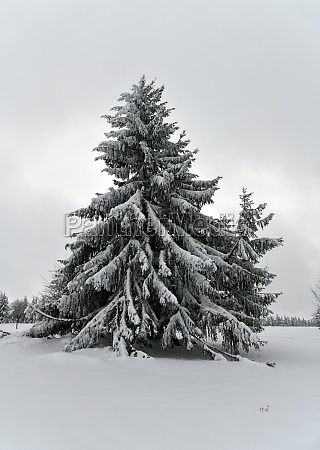 snow covered winter forest in the
