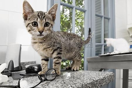 cats in a veterinary hospital