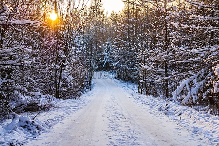 winter unusual road and forest trail