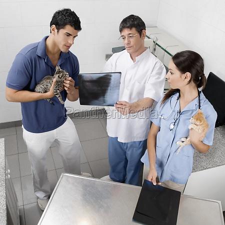 vet examining a catZs xray