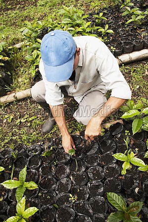 farmer planting coffee seedlings