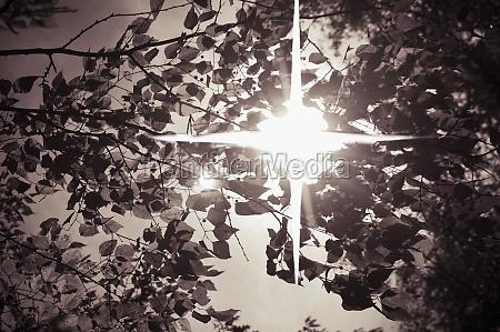 sun shining through leaves
