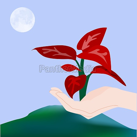 personZs hand holding a plant