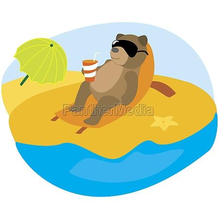 bear resting on the beach