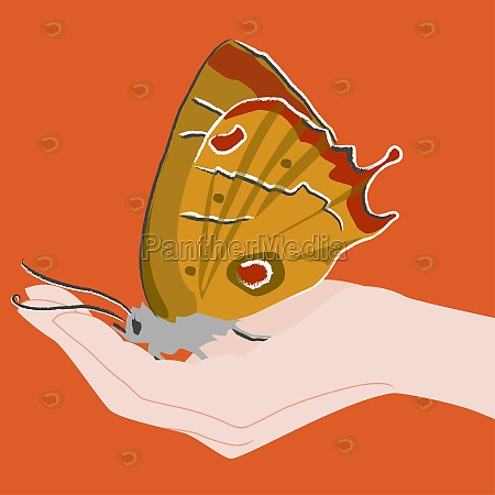 butterfly on a personZs hand