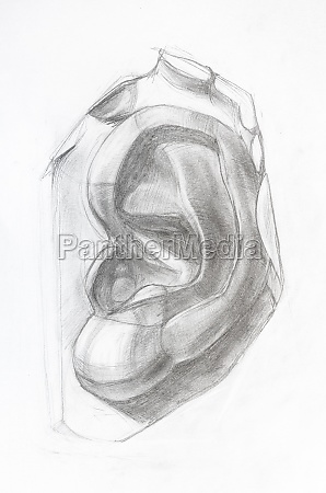 academic drawing hand drawn male
