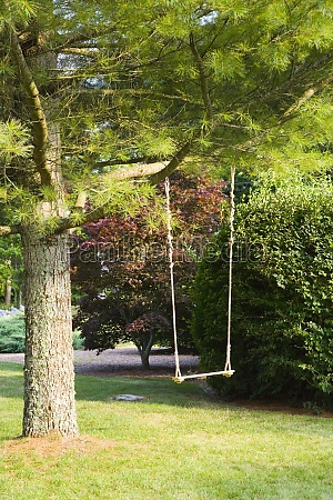 rope swing hanging on a tree