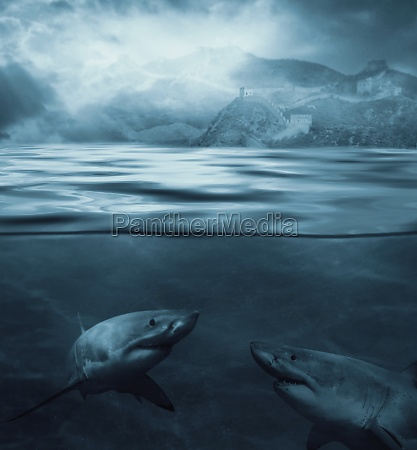 two sharks underwater