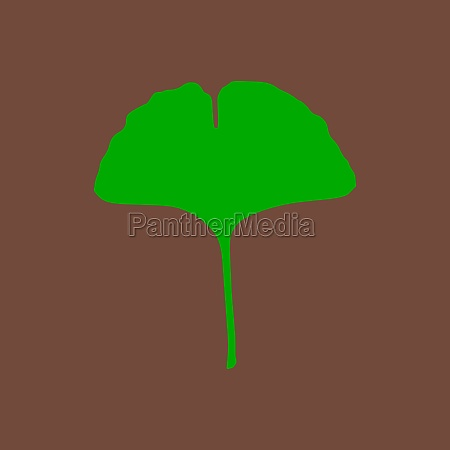 ginkgo leaf and background