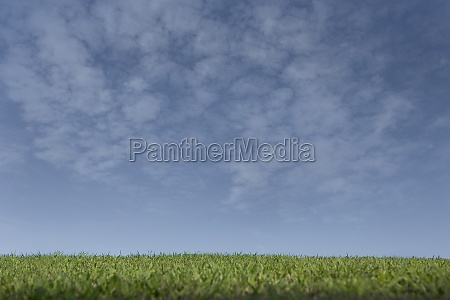 cultivated field under cloudy sky
