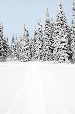 snow covered trees on a landscape