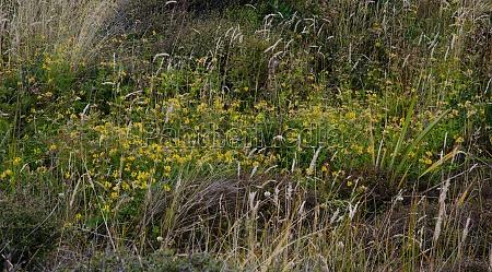 vegetation in mason bay