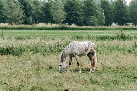 portrait of a horse in the
