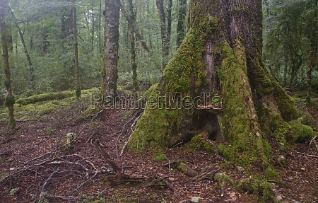 rainforest in fiordland national park