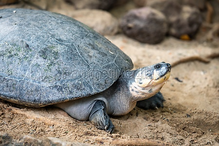 portrait of the turtle on