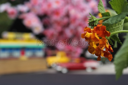 flowers closeup with vintage diner and