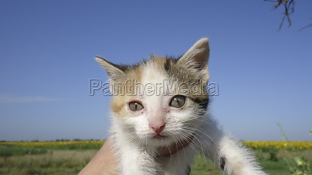 red haired cat domestic pet favorite