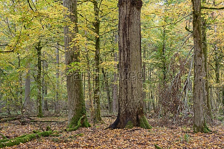 broken trees in autumn
