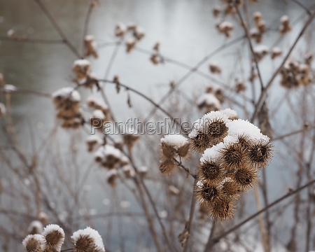 plant covered with snow