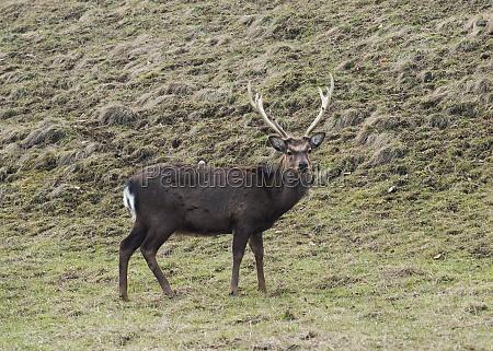 deer grazing on a meadow