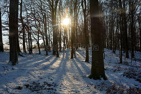 sunrise in a wintry forest with