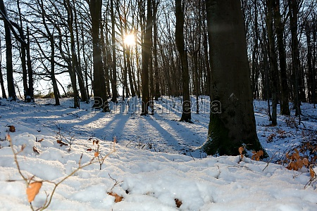 deep snow with sunrise behind the