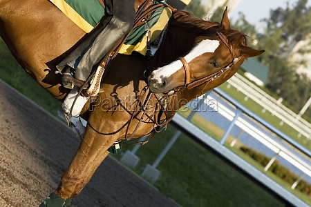 low section view of a jockey